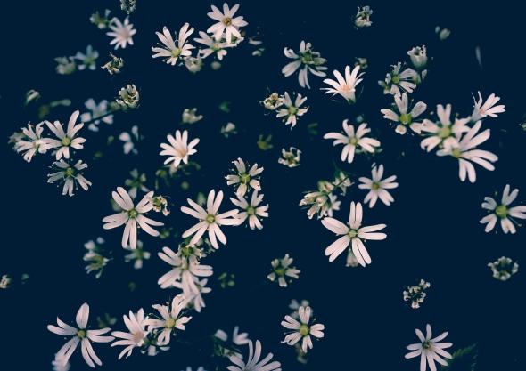 Little stars - Denmark