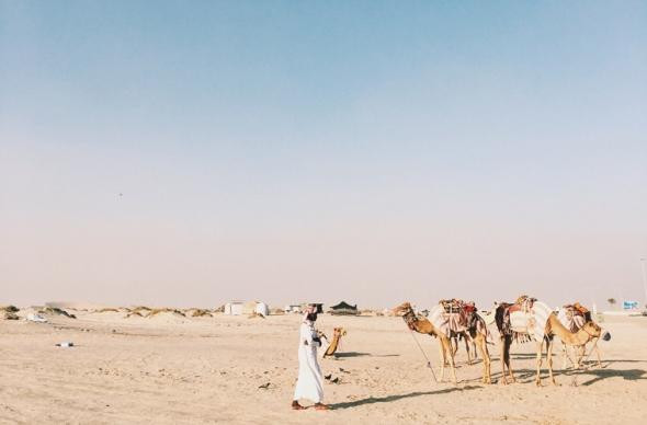Camel life