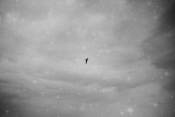 sommer-seagull